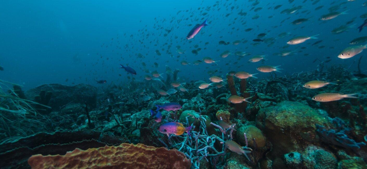 Barbados photo 4