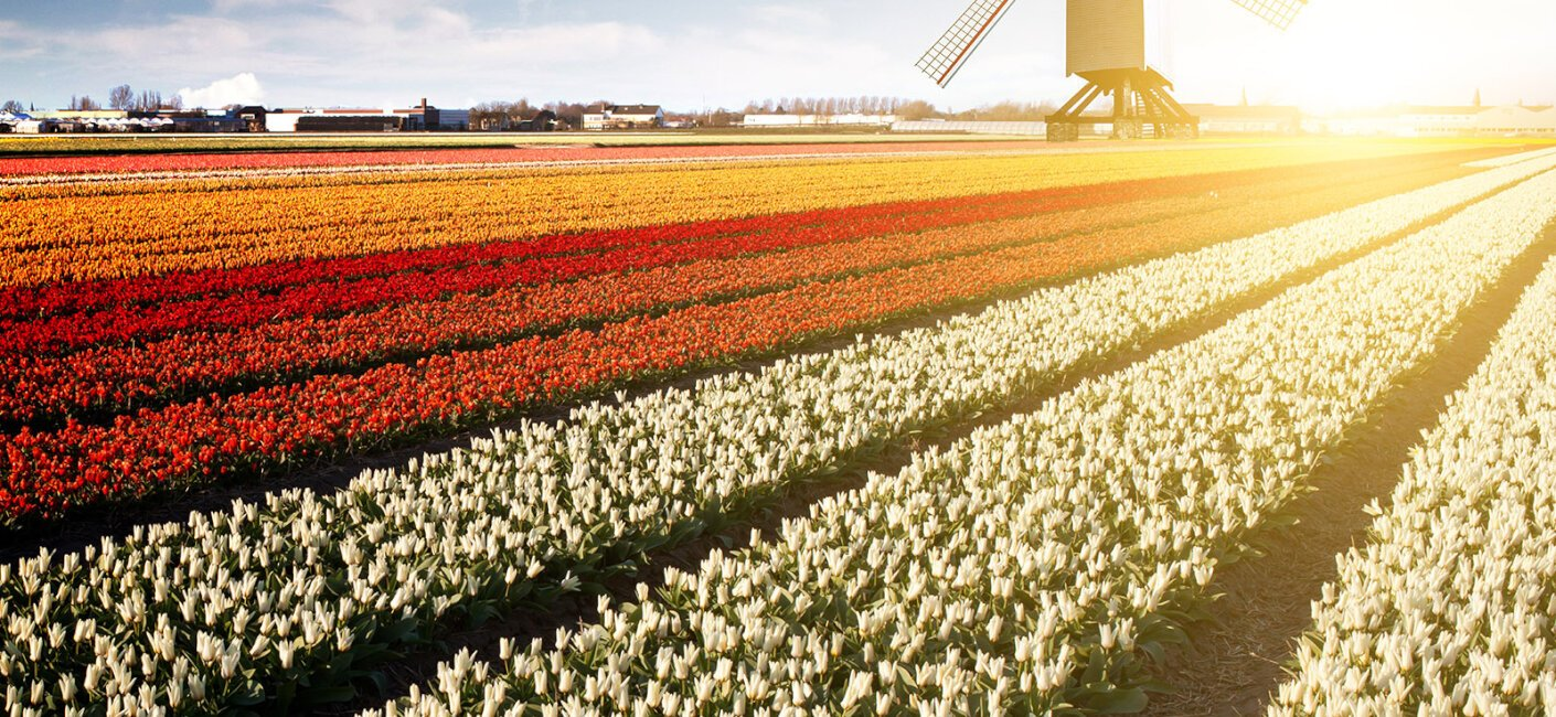 Holland photo 4